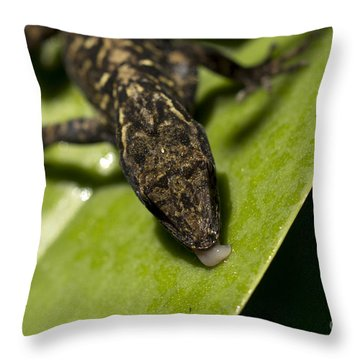 Throw Pillow featuring the photograph Thirsty Brown Anole by Meg Rousher