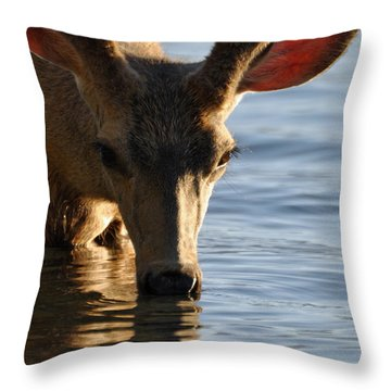 Thirsty Deer In Lake Mcdonald Throw Pillow by Bruce Gourley