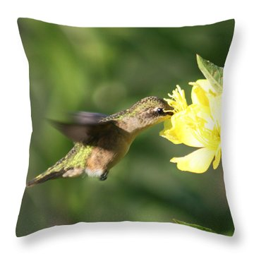 Thirsty Little Hummingbird Throw Pillow