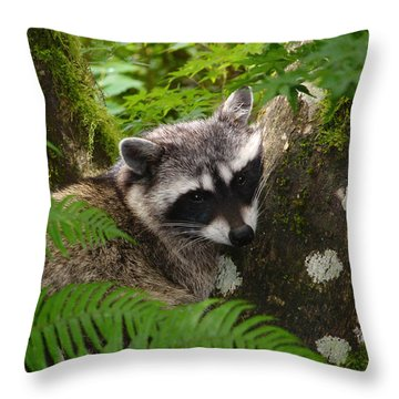 This Is A Nice Spot To Sleep Throw Pillow by Kym Backland