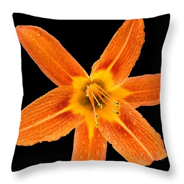 This Orange Lily Throw Pillow