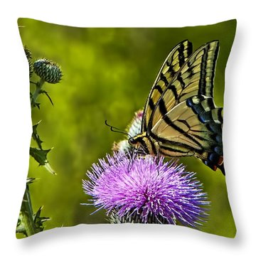 Throw Pillow featuring the photograph Thistle Do Just Fine by Gary Holmes