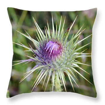 Throw Pillow featuring the photograph Thistle Flower by George Atsametakis