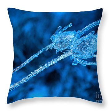 Thistle Plant On Icy Night Throw Pillow
