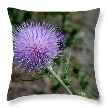 Throw Pillow featuring the photograph Thistle by Rod Wiens