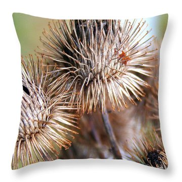 Thistle Seedheads Throw Pillow by Laurel Talabere