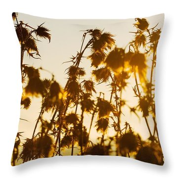 Throw Pillow featuring the photograph Thistles In The Sunset by Chevy Fleet