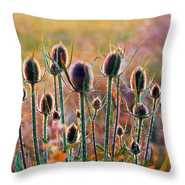 Thistles With Sunset Light Throw Pillow