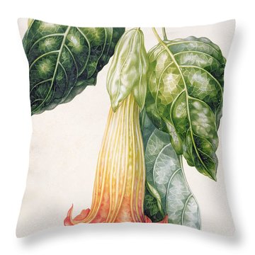 Thorn Apple Flower From Ecuador Datura Rosei Throw Pillow