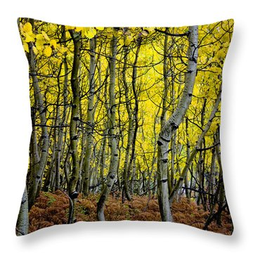 Throw Pillow featuring the photograph Through The Aspen Forest by Ellen Heaverlo