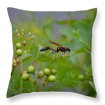 Throw Pillow featuring the photograph Thread-waist Wasp by James Petersen