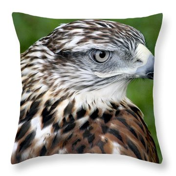 The Threat Of A Predator Hawk Throw Pillow
