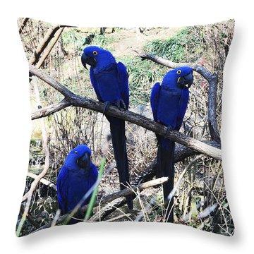 Three Amigo's Throw Pillow by Kathleen Struckle
