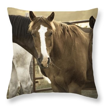 Throw Pillow featuring the photograph Three Amigos by Steven Bateson