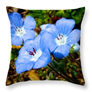Three Baby Blue Eyes In Park Sierra-ca Throw Pillow by Ruth Hager