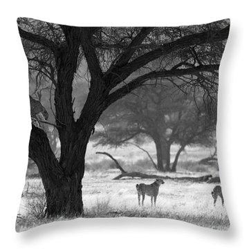 Three Cheetahs Throw Pillow by Max Waugh