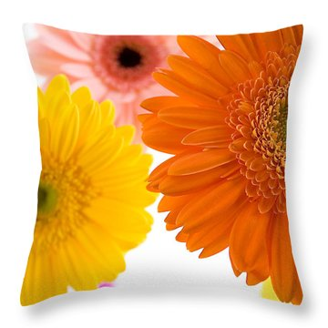 Three Colorful Gerbers  Throw Pillow