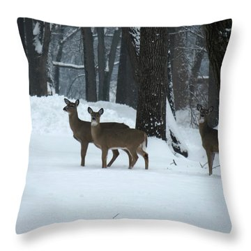 Throw Pillow featuring the photograph Three Deer In Park by Eric Switzer