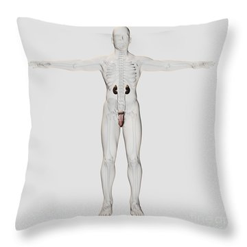 Three Dimensional Medical Illustration Throw Pillow by Stocktrek Images