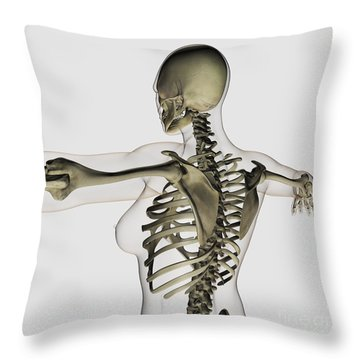 Three Dimensional View Of Female Upper Throw Pillow by Stocktrek Images