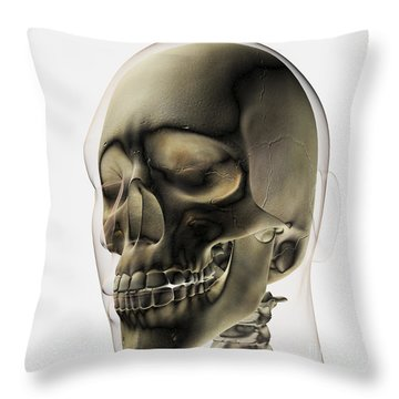 Three Dimensional View Of Human Skull Throw Pillow by Stocktrek Images
