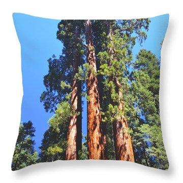 Three Giant Sequoias  Throw Pillow