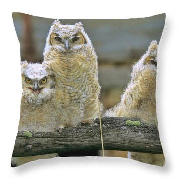 Three Great-horned Owl Chicks Throw Pillow