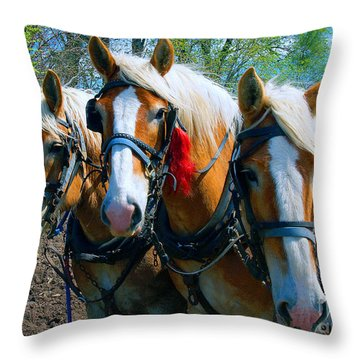 Throw Pillow featuring the photograph Three Horses Break Time  by Tom Jelen