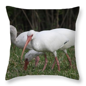 Throw Pillow featuring the photograph Three Ibis Together by Christiane Schulze Art And Photography