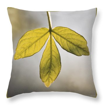 Throw Pillow featuring the photograph Three Leaves by Jaki Miller