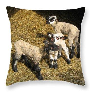 Three Little Lambs In Spring Sunshine Throw Pillow