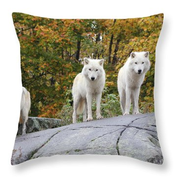 Three Looking At Me Throw Pillow