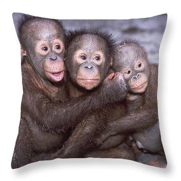 Three Orangutan Babies Throw Pillow