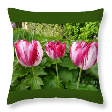 Three Pink Rembrandt Tulips Throw Pillow by Lingfai Leung