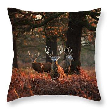 Three Red Deer, Cervus Elaphus Throw Pillow