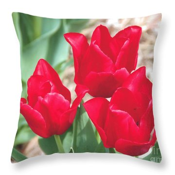Three Red Tulips Throw Pillow