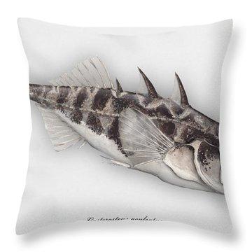 Three-spined Stickleback Gasterosteus Aculeatus - Stichling - L'epinoche - Espinoso - Kolmipiikki Throw Pillow
