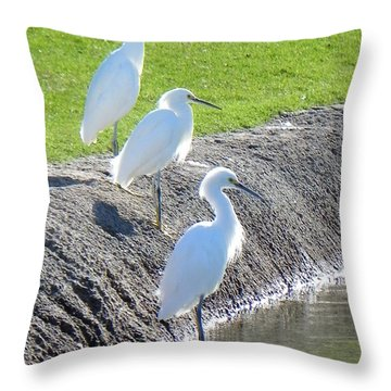 Throw Pillow featuring the photograph Three Stooges by Deb Halloran