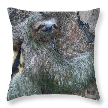Three Toed Sloth Throw Pillow by Anne Rodkin
