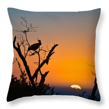 Three Vultures Waiting Throw Pillow