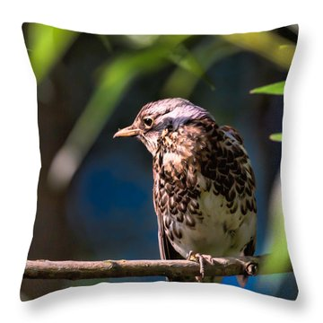 Thrush Throw Pillow