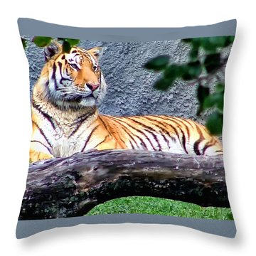 Throw Pillow featuring the photograph Tiger 1 by Dawn Eshelman