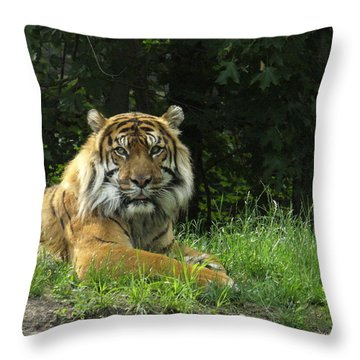 Throw Pillow featuring the photograph Tiger At Rest by Lingfai Leung