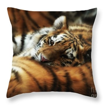 Tiger Cub Resting On Mom's Back Throw Pillow