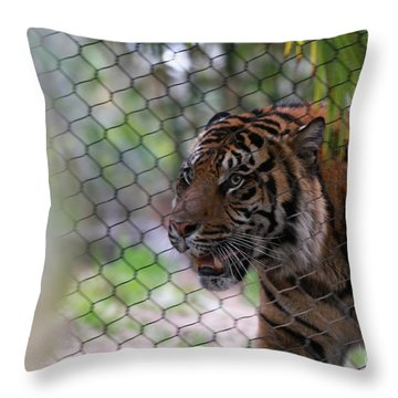 Tiger Throw Pillow by Edward R Wisell