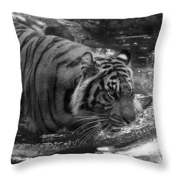 Tiger In The Water Throw Pillow by Lisa L Silva