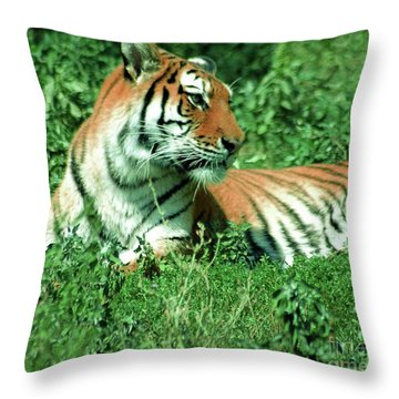 Tiger Throw Pillow by Kathleen Struckle