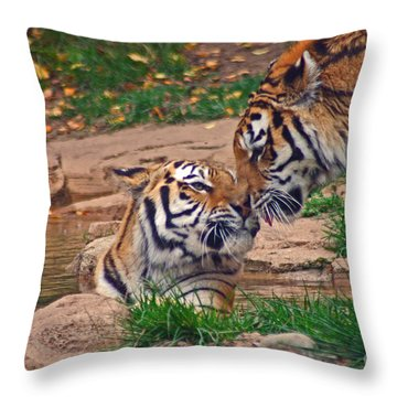 Tiger Kiss Throw Pillow by David Rucker