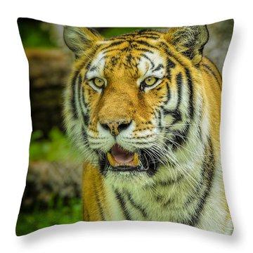 Tiger Stare Throw Pillow by LeeAnn McLaneGoetz McLaneGoetzStudioLLCcom