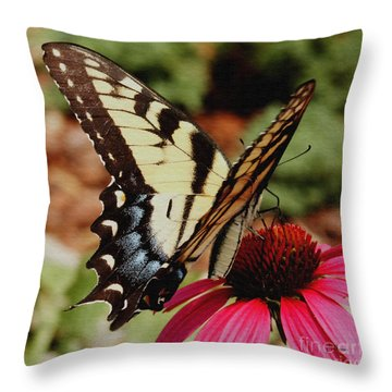 Throw Pillow featuring the photograph Tiger Swallowtail  by James C Thomas
